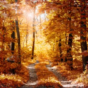 wat te doen Lede wandelen fietsen bos herfst weekend