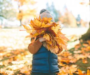 wat te doen Lede herfst weekend vandaad deze week herfst